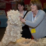 bas-national-show-2015_highlights_ (104 of 209)
