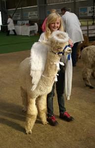 Alpaca Fancy Dress