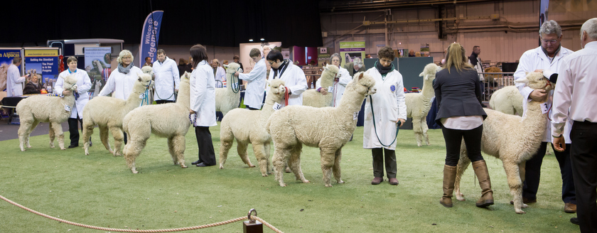 bas-national-show-2015_highlights_ (189 of 209)