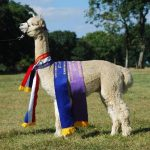 EP Cambridge Wildfire of Alpaca Stud